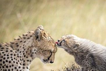 Concorso di fotografia National Geographic